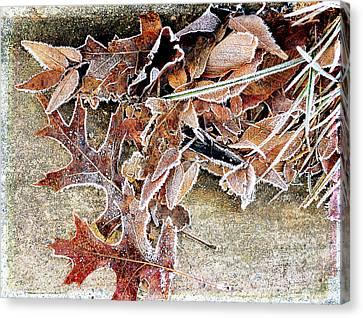 Frosty Morn Canvas Print