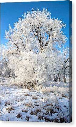 Frosty Morning Canvas Print by Shane Bechler