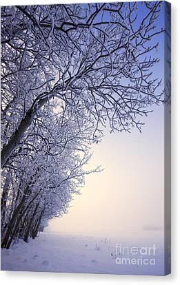 Frosty Pasture Canvas Print