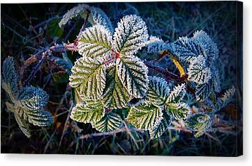Canvas Print featuring the photograph Frosty Ten Degrees by Julia Hassett