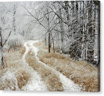 Canvas Print featuring the photograph Frosty Trail 2 by Penny Meyers