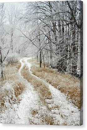 Frosty Trail Canvas Print by Penny Meyers