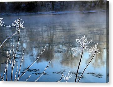 Frosty Webs And Weeds Canvas Print by Hanne Lore Koehler