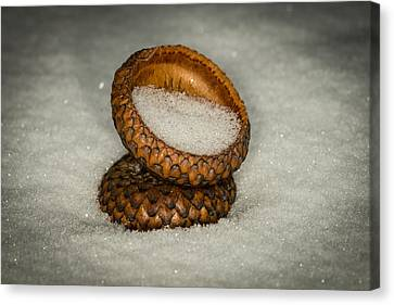 One Of A Kind Canvas Print - Frozen Acorn Cupule by Paul Freidlund