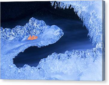 Frozen Beauty Aka Ice Is Nice Canvas Print by Bijan Pirnia