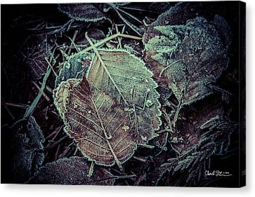 Frozen Canvas Print by Charlie Duncan
