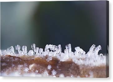 Frozen City Canvas Print by Shelby Waltz