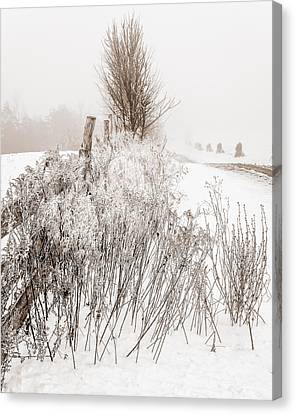 Frozen Fog On A Hedgerow - Bw Canvas Print