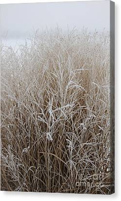 Frozen Grass Canvas Print by Debbie Hart