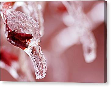 Canvas Print featuring the photograph Frozen Jewel  by Debbie Oppermann