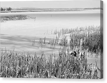 Frozen Lake And Ice Coated Bullrushes Canvas Print by Louise Heusinkveld