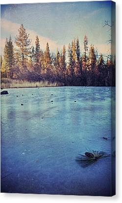 Pine Cones Canvas Print - Frozen by Laurie Search