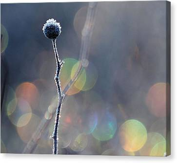 Canvas Print featuring the photograph Frozen Orb by Paul Noble