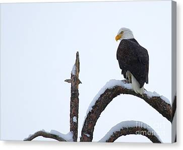 Frozen Perch Canvas Print by Mike  Dawson