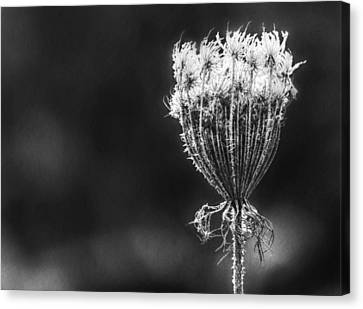 Canvas Print featuring the photograph Frozen Queen by Melanie Lankford Photography