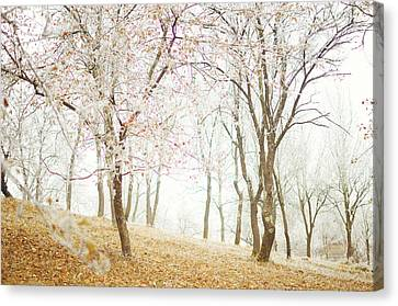 Frozen Spring Canvas Print by Silvia Floarea Toth