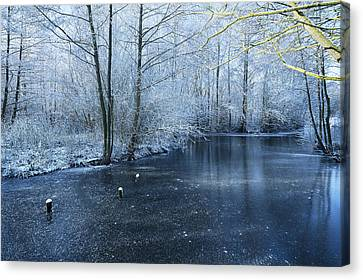 Frozen Canvas Print by Svetlana Sewell