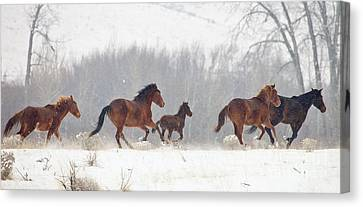 Frozen Track Canvas Print by Mike  Dawson