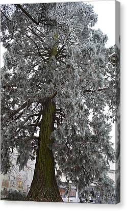 Canvas Print featuring the photograph Frozen Tree 2 by Felicia Tica