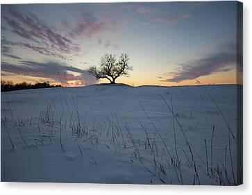 Frozen Tree Of Wisdom Canvas Print by Aaron J Groen