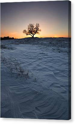 Frozen Tree Of Wisdom Canvas Print by Aaron J Groen