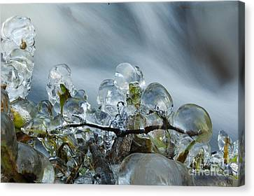 Frozen Wanderland I Canvas Print