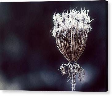 Canvas Print featuring the photograph Frozen Wisps by Melanie Lankford Photography