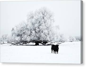 Frozen World Canvas Print by Mike  Dawson