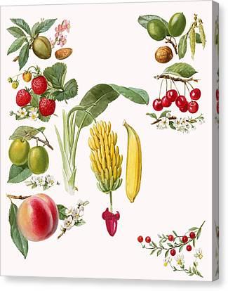 Fruits Canvas Print by English School