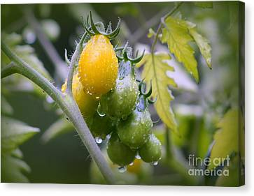 Fruits Of Our Labours Canvas Print by Leone Lund