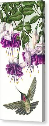 Fuchsia Beauty Canvas Print by Pat Erickson