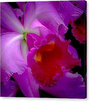 Fuchsia Cattleya Orchid Squared Canvas Print by Julie Palencia
