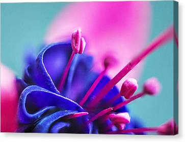 Fuchsia Detail Canvas Print by Arkady Kunysz