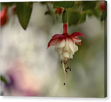 Fuchsia Love Canvas Print