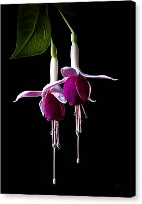 Canvas Print featuring the photograph Fuchsias by Endre Balogh