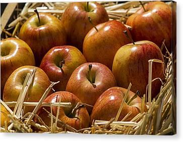 Apple Canvas Print - Fuji Apples by Garry Gay