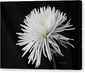 Fuji Mum Canvas Print by Bonnie Willis