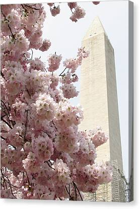 Full Bloom In Dc Canvas Print by Jennifer Wheatley Wolf