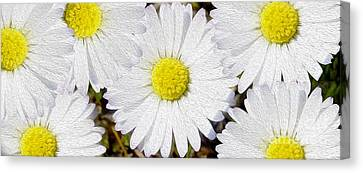 Full Bloom Canvas Print by Jon Neidert