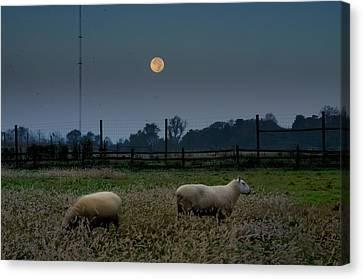 Full Moon At Erdenheim Farm Canvas Print