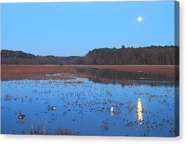 Full Moon At Great Meadows National Wildlife Refuge Canvas Print by John Burk