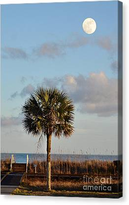 Full Moon At Myrtle Beach State Park Canvas Print by Kathy Baccari
