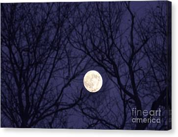 Full Moon Bare Branches Canvas Print