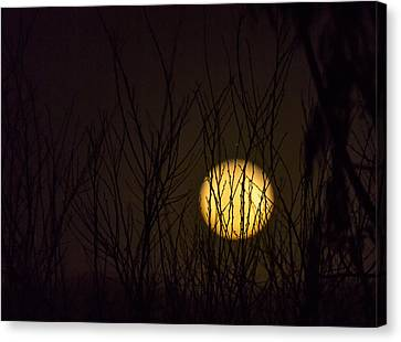 Full Moon Behind The Trees Canvas Print by Angela A Stanton