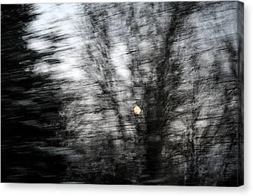 Full Moon Behind Trees Canvas Print by Carolyn Reinhart