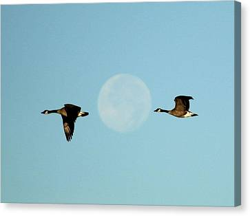 Full Moon Geese Canvas Print