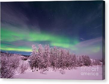 Snowy Night Night Canvas Print - Full Moon Lights by Priska Wettstein