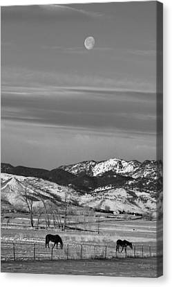 Full Moon On The Co Front Range Bw Canvas Print by James BO  Insogna