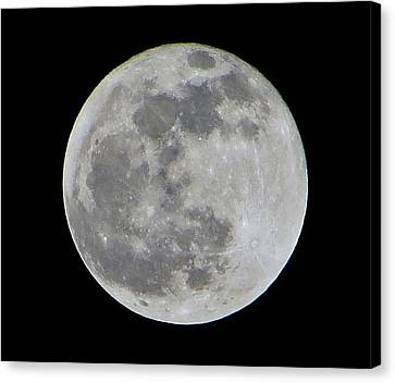 Full Moon Over Florida Canvas Print by Tim Townsend