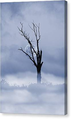 Full Moon Rising Canvas Print by David Simons